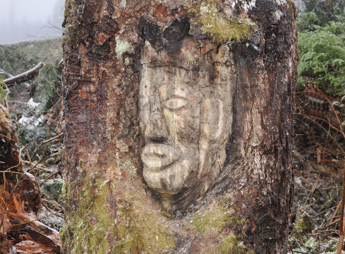 A tree that speaks the history of Klahoose Nation