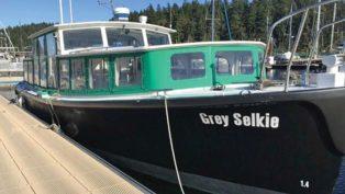 The Grey Selkie