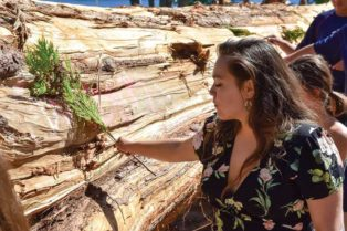 young woman blessing cedar log