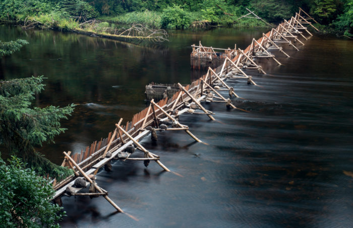 Nation revitalizes traditional fish weir to manage salmon